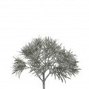 ingrosso Valigie &Trolleys: Cespuglio Pilon , H30cm, verde-gelo, bianco